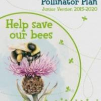 All-Ireland Pollinator Plan - Junior version